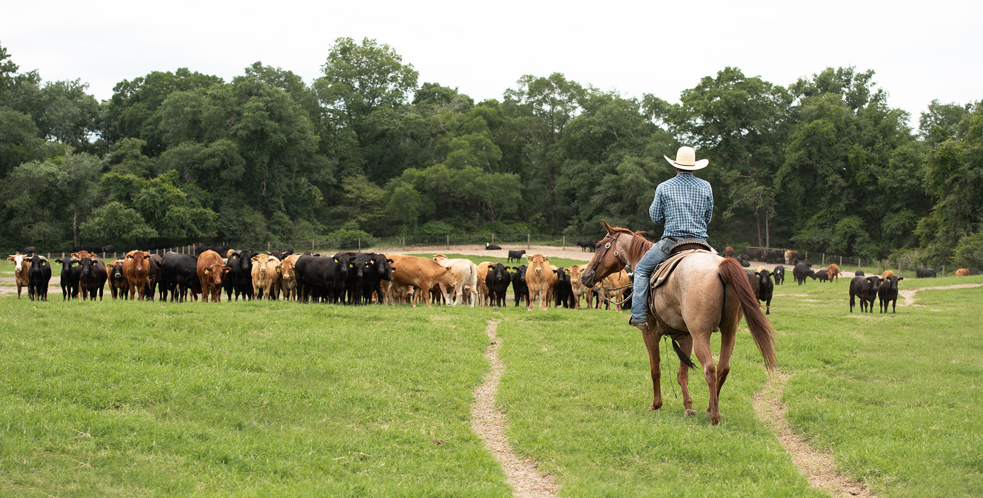 Cattle Producers